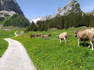 Wanderung Brülisau Fälensee
